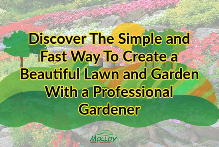 Discover the simple and fast way to create a beautiful lawn and garden with a professional gardener