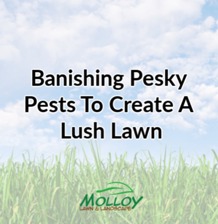 Banishing Pesky Pests To Create A Lush Lawn