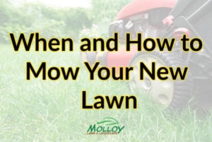 When and How to Mow Your New Lawn
