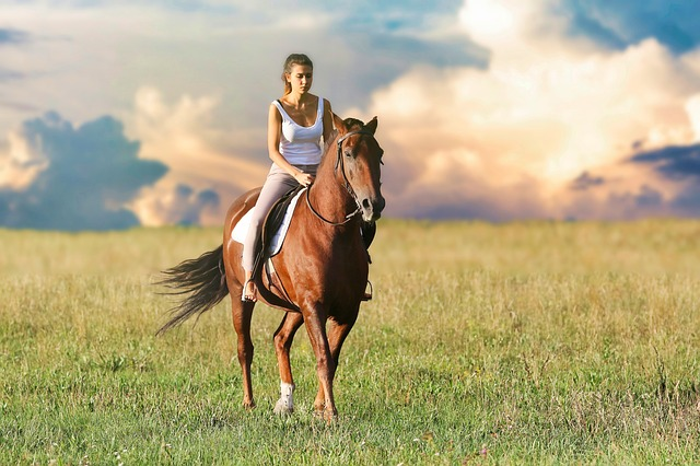 protect your horse from ticks