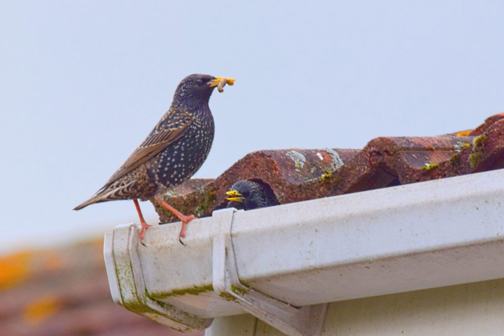 pests in your gutters